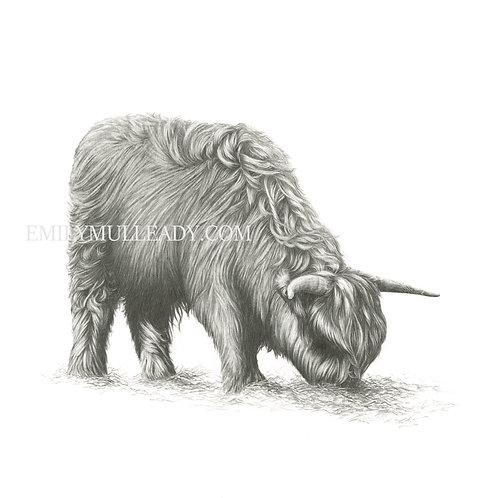 """Hamish of Wandlebury"" - Highland Cow (Original, unframed or framed)"