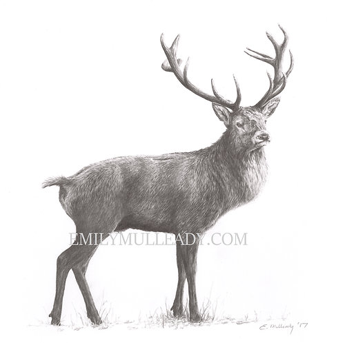 """Fiadh"" - Red deer stag (Limited edition print)"