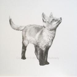 """""""Up!"""" - Fox cub (Original, unframed)"""