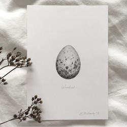 """""""Study of a woodcock egg in graphite"""