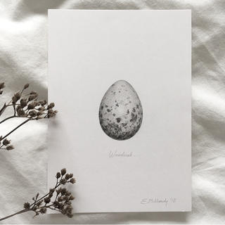 """""""Study of a woodcock egg in graphite"""""""