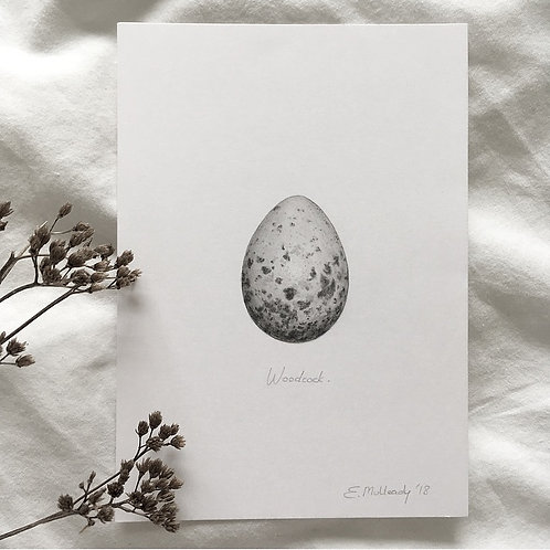 """""""Study of a woodcock egg in graphite"""" (Original, unframed)"""