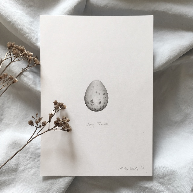 """Study of a song thrush egg in graph"