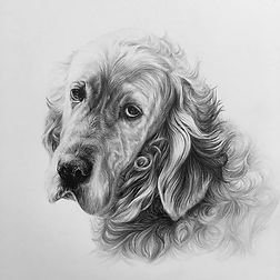 The finished portrait of Toby, the Engli