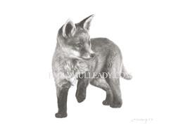 """""""Fox cub, exploring""""(Original, frame"""
