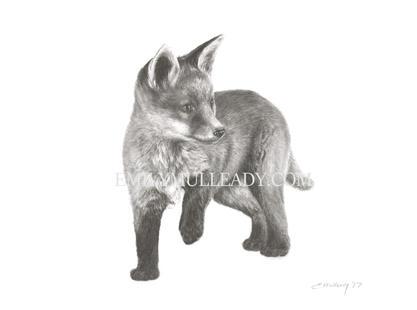 """Fox cub, exploring"""