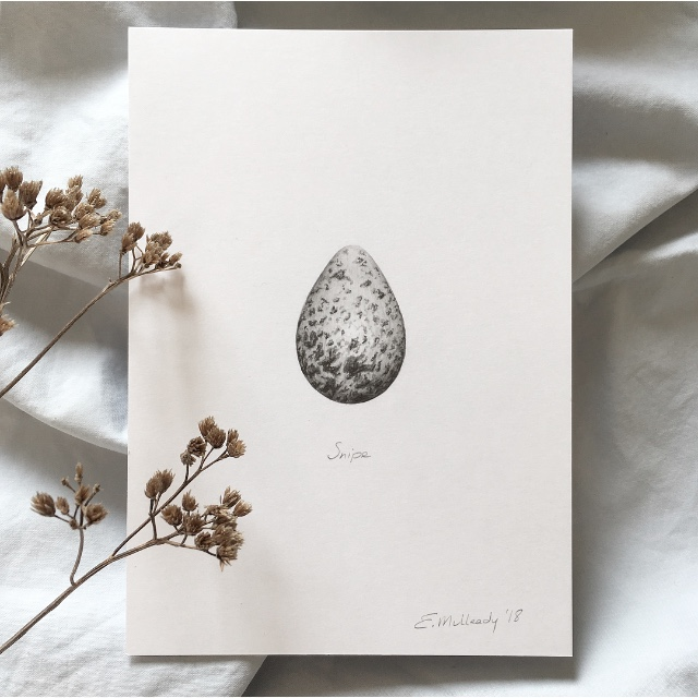 """Study of a snipe egg in graphite"" ("