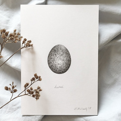 """Study of a common kestrel egg in graphite"" (Original, unframed)"