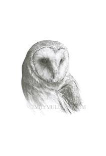 """Barn Owl (Tyto Alba)"""