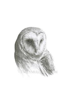 """""""Barn Owl (Tyto Alba)"""" (Original, un"""