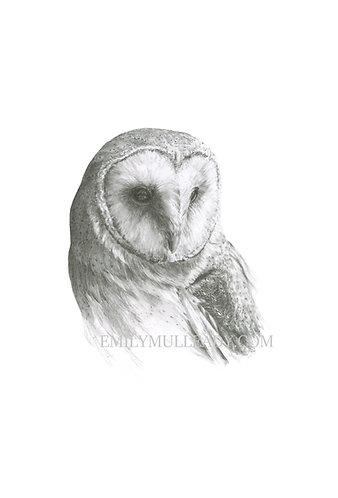 """""""Barn Owl (Tyto Alba)"""" (Original, unframed or framed)"""