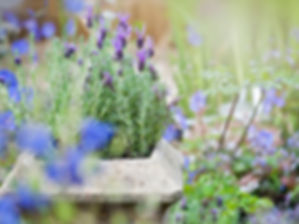 close-up-image-of-a-stone-garden-planter