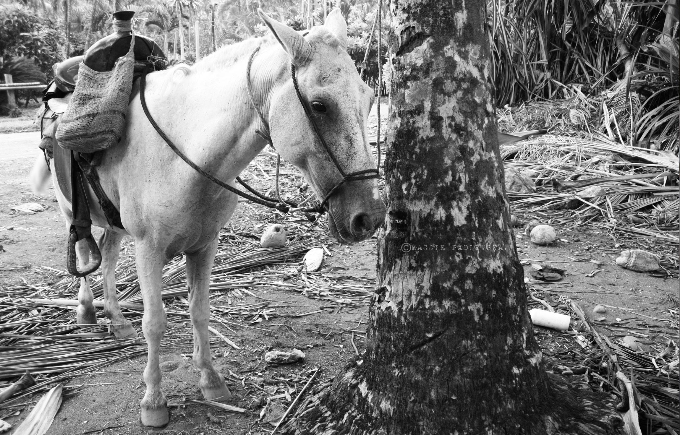 PADLEWSKA-RAMON HORSE3