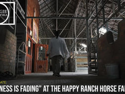 """HAPPINESS IS FADING""at The Happy Ranch Horse Farm (Siem Reap, Cambodia)"