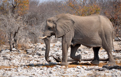 PADLEWSKA-Elephant2