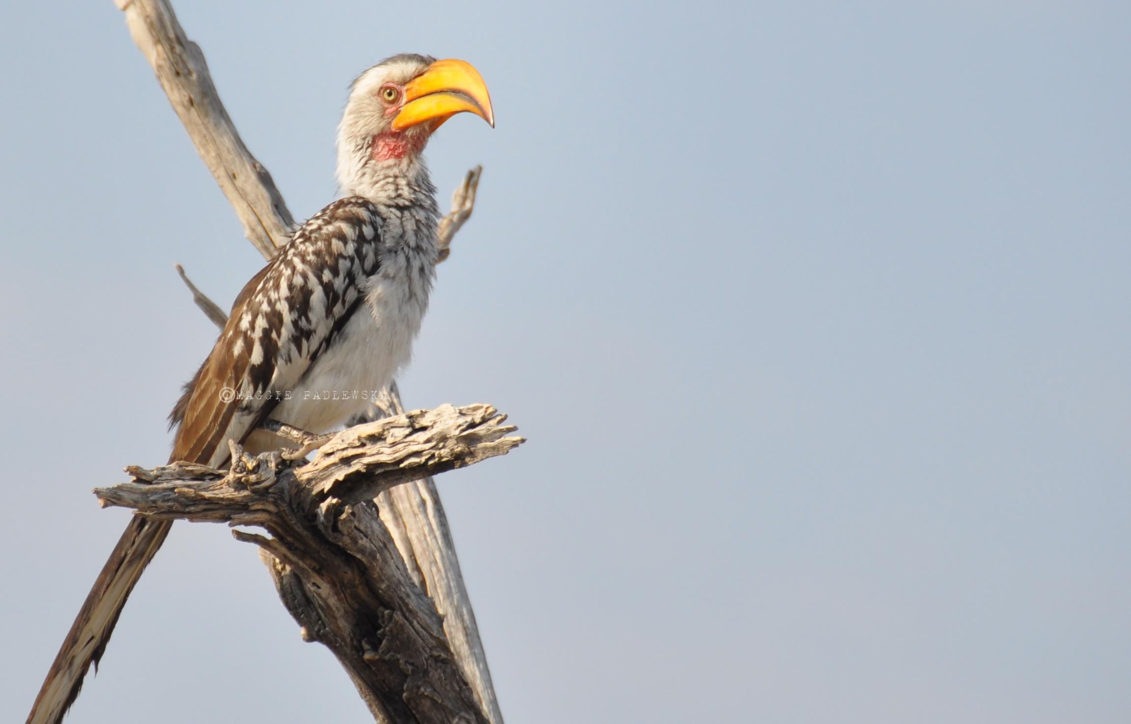 PADLEWSKA-Ptak