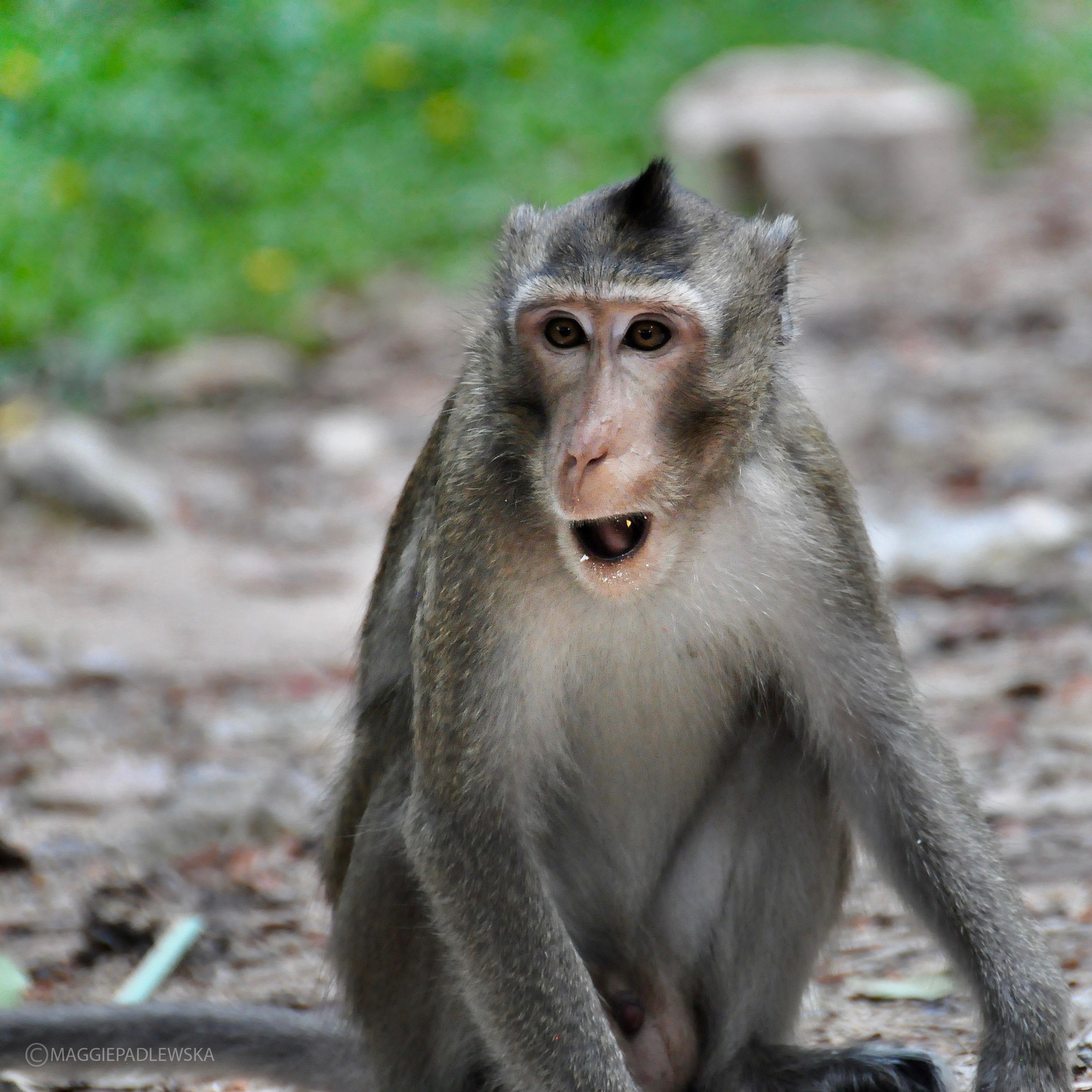 MonkeyPadlewskaCR1