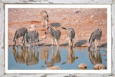 Zebras Truquoise-in frame.jpg