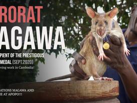 MAGAWA: Awarded UK's Prestigious PSDA Gold Medal