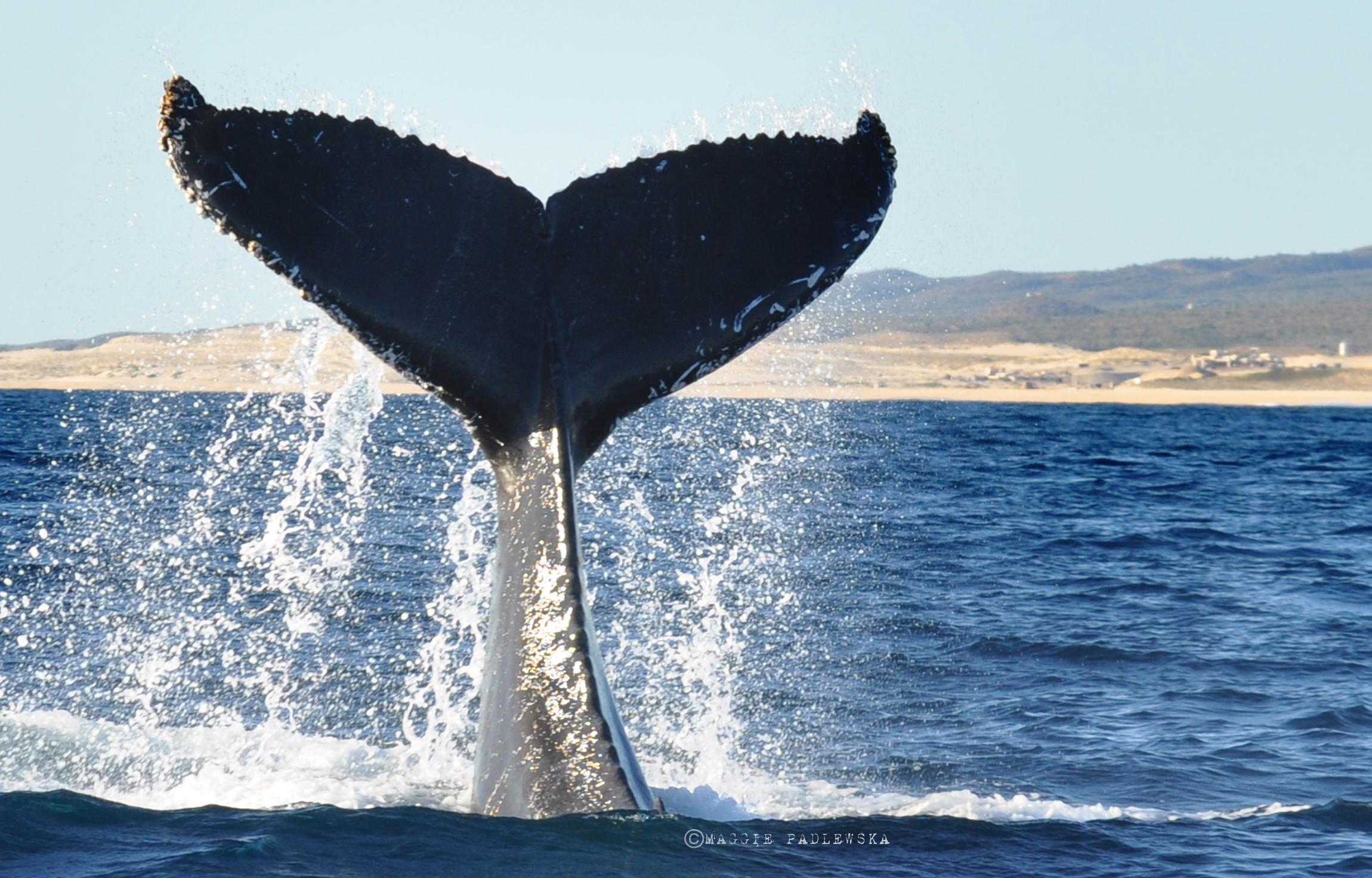 PADLEWSKA-Whale