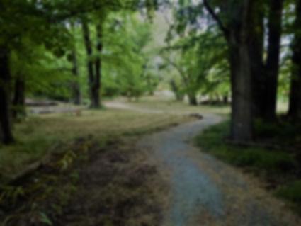 Elm Grove walk