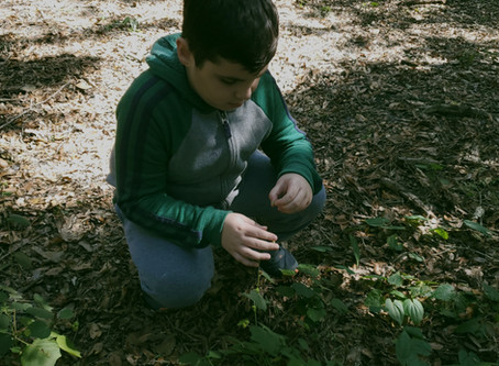Our newest forest school location