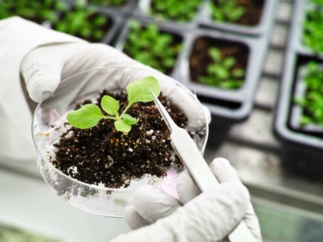 St. Vincent and the Grenadines: A technopole for plant-based research in the 21st Century