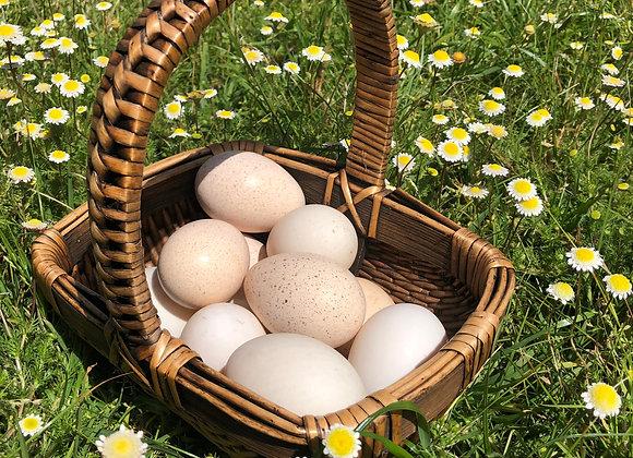 Organic Pastured Duck & Turkey Eggs: half dozen