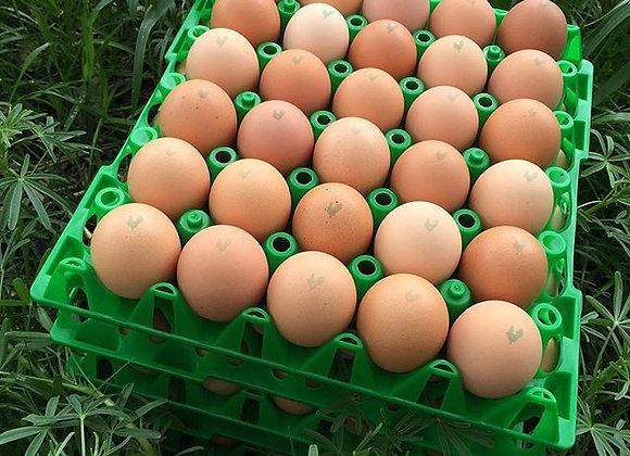 Open Range Organic Eggs - tray
