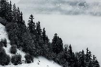 eberhard-grossgasteiger-pine trees.jpg