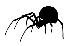 hanging-spider-silhouette-americanspiders00gertrich_0086B