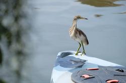 Birdlife Pasak River