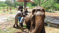 Caring for Rescued Elephants
