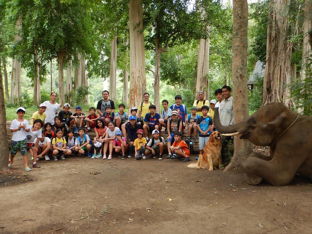 Thai Elephant Conservation Centre, Khao Yai