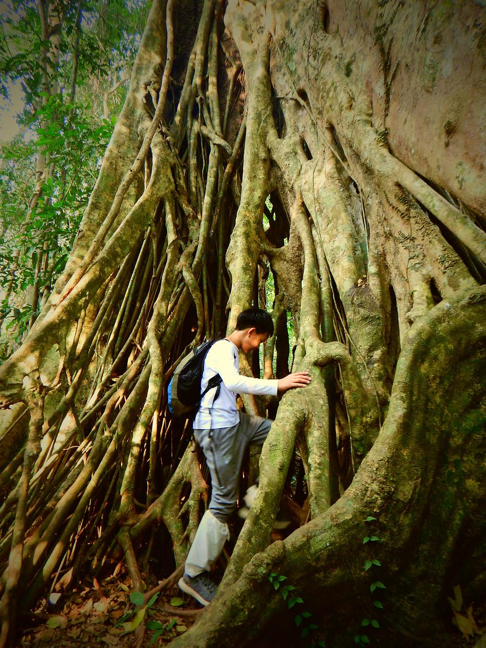 Exploring the Khao Yai Rainforest