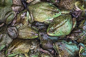 03-plagues-of-egypt-frogs.jpg