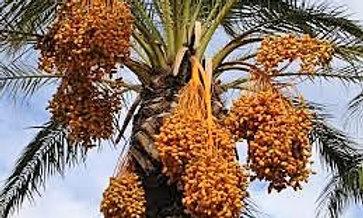 Dates Honey 50mg