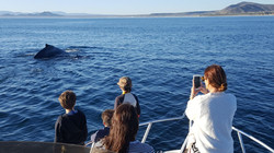 Whales in Sea of Cortez