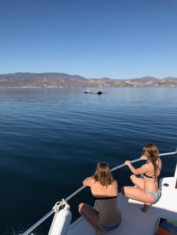 Whale Watching Los Barriles