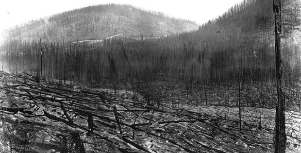 "Stands of trees burned in the ""Big Burn"" of 1910"