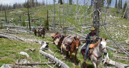 Joe Williams travels by horse, taking packing mules on challenging adventures in the Frank Church Wilderness area and teaching fellow riders Leave No Trace principles. (credit, The Wilderness Society)