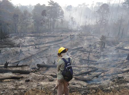 Mas de 300 hectáreas de bosque se consumen en la zona de Montecillos, La Paz, debido a los incendios
