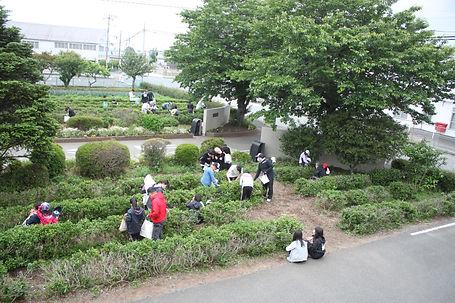茶摘み1.JPG