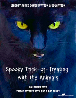 Spooky Trick-or-Treating with the Animal