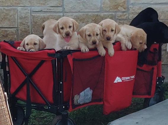 Puppy Wagon 2
