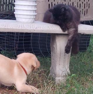 Xuxu...don't tempt the puppy!