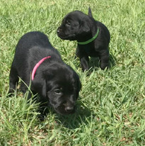 Two females (available)