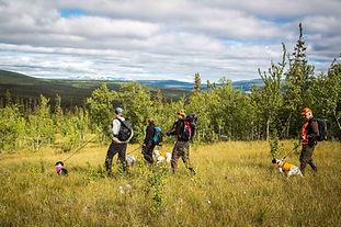 Bild 4. På hemväg från Gebnafjället. 6L8
