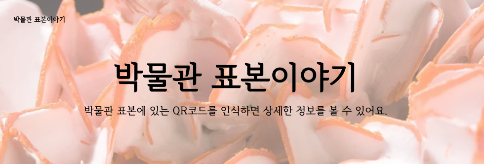 박물관-표본이야기_김진희-002 (2).png