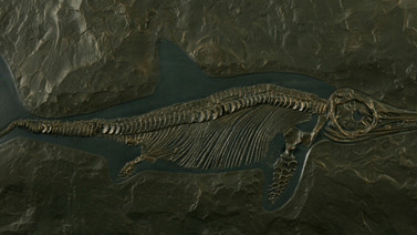 이크티오사우루스 ( Ichthyosaurus)